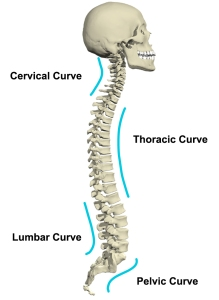 spine-diagram